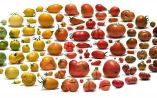 Лучшие сорта помидор: инструкция по выбору, описание, фото