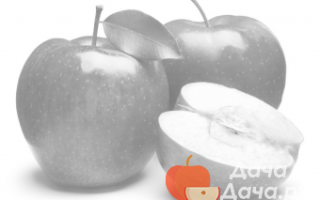 Яблоня «Янтарка алтайская»: описание и особенности сорта