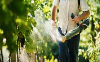 Сера для винограда: методы и способы применения