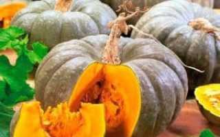 Лечебная тыква: характеристика и описание лекарственного сорта, фото кустарников и урожая, отзывы опытных фермеров
