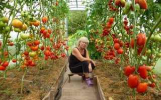 Выращивание помидор в теплице: важные правила