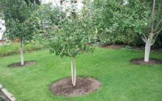Плодовые деревья в саду: сажаем правильно