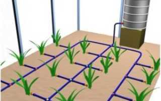 Капельный полив в теплице: устройство и преимущества системы