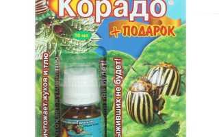 Корадо: инструкция по применению, как развести репеллент от колорадского жука