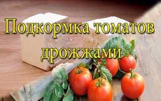 Подкормка помидор дрожжами в открытом грунте + отзывы