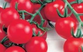 Томат Красная гроздь: описание и характеристика, особенности посадки и выращивания, болезни и вредители, достоинства и недостатки