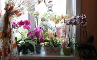 Как пересадить орхидею в домашних условиях в другой горшок Пошаговое фото-видео