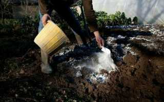 Кислая почва – как определить и как раскислить + фото