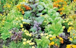 Совместимость растений на овощной грядке огорода