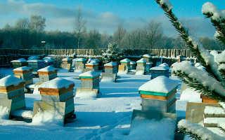 Подготовка пчел к зиме: корм, строительство гнезда, утепление, зимовка на открытом воздухе и основные ошибки – видео