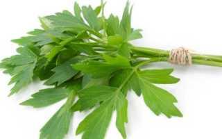 Любисток. Секреты по выращиванию лекарственной травы