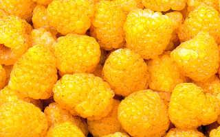 Сорта желтой малины: описания и особенности