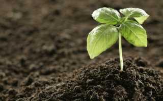 Лучшие органические удобрения: описание и способы применения