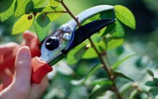 Как избавиться от вишни: наиболее щадящие способы