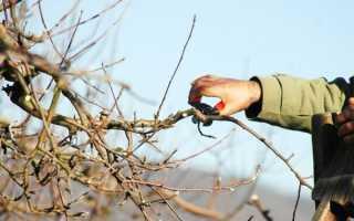 Как омолодить старую яблонюосенью и в другие сезоны: инструкция