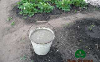 Подкормка клубники в саду: как правильно?