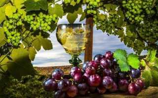 Саперави Северный – любимый виноделами сорт винограда