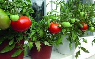 Когда пересаживать помидоры в отдельные горшки | Садовод
