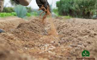 Мука: как использовать ценное удобрение на огороде