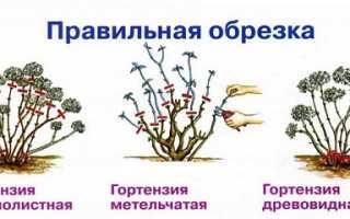Подготавливаем гортензию на зиму – правила зимовки для цветов