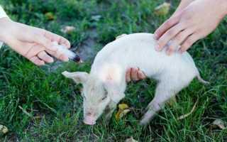 Ветранквил для животных: инструкция, дозировка