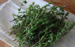 Чабер садовый: описание, польза, выращивание из семян и фото