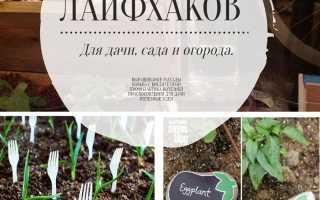 Лайфхаки садовода: ТОП лучших советов
