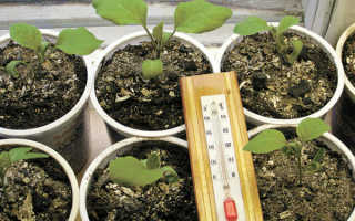 Выращивание семян – 6 шагов для обильного урожая + фото и видео