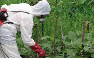 Вредители огурцов в теплице и открытом грунте, как бороться, фото