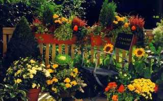 Подсолнечник в оформлении сада – варианты оформления