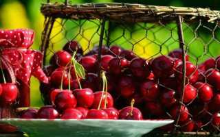 Урожайность вишни: лучшие советы о том, как ее увеличить!