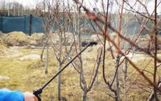 Опрыскивание деревьев и кустарников весной от вредителей