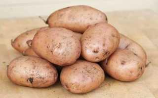 """Картофель """"Жуковский"""": описание раннего, урожайного сорта"""