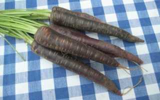 Черная морковь: польза, разновидности, описание сорта фото