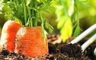 Как сеять морковь без прореживания видео