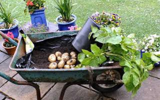 Полезные советы садоводу: как получить богатый урожай с участка?