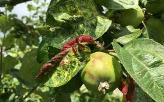 Тля на яблоках: профилактика и способы борьбы