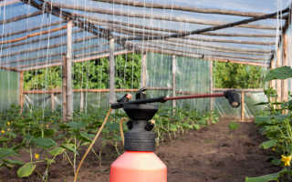 Подкормка огурцов в теплице – какие удобрения после высадки