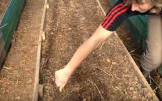 Какие сидераты лучше посеять весной