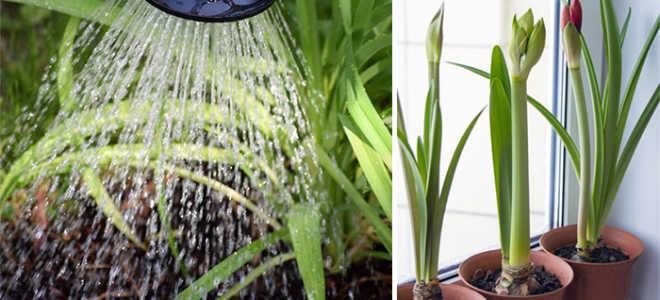 Правильный полив растений – как ухаживать