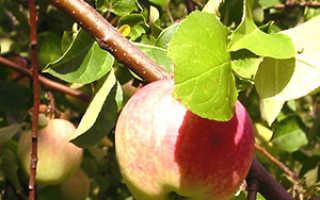 Болезни яблонь: описание, разновидности, фотографии, как бороться