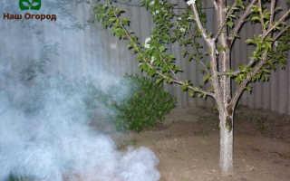 Защита от заморозков плодовых деревьев: ТОП лучших советов!
