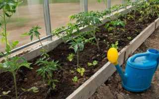Как подкармливать помидоры во время цветения и плодоношения в теплице Фото Видео