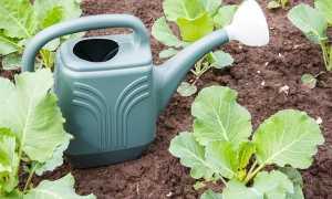 Чем подкормить капусту, виды и сроки подкормки