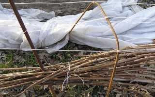 Подготовка ежевики к зиме: уход за ежевикой осенью