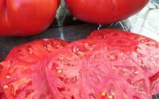Чудо-томат болгарский: описание и характеристика, особенности посадки и выращивания, болезни и вредители, достоинства и недостатки