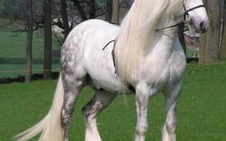 Породы лошадей: фото и названия с описанием самых популярных пород лошадей