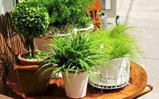 Как оплодотворять домашние растения зола