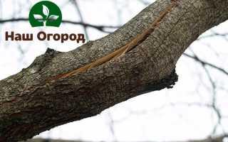 Раны на плодовых деревьях: лечим навсегда