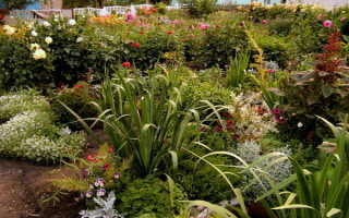 Клумба в августе – сбор семян, пересадка многолетников